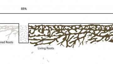 Constructing Buildings within the Root Protection Area of Trees Part 2